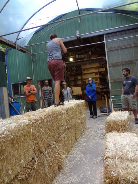 Driving bamboo stakes into bales