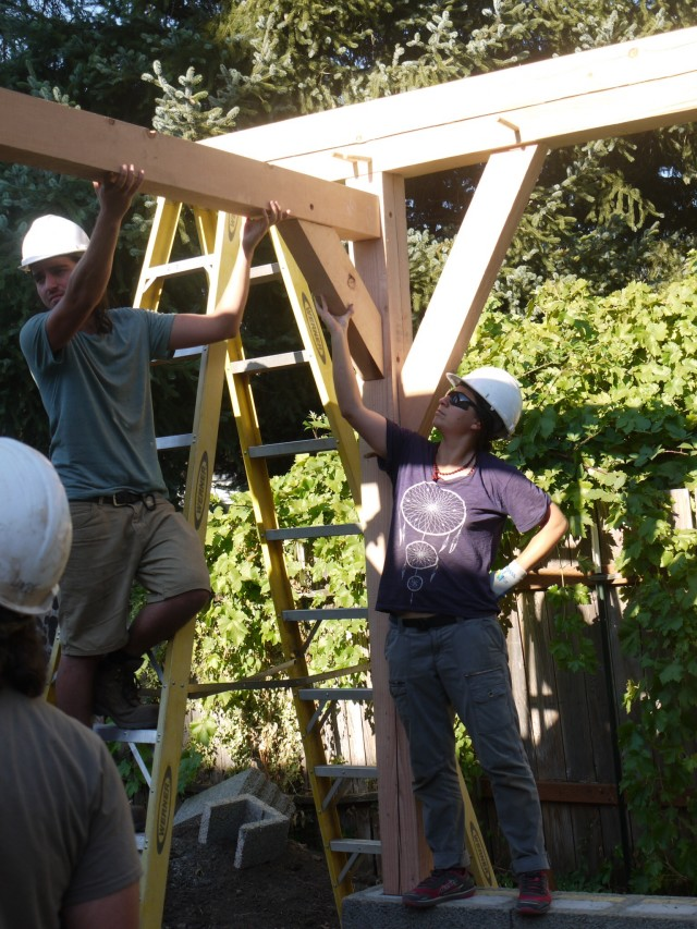 Apparently under the impression that I am holding up the entire timber frame
