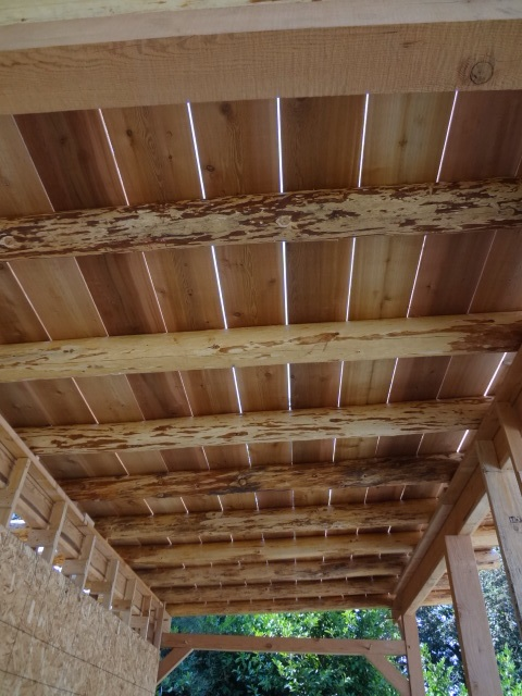 Roof sheathing - cedar boards (1x10?) nailed to the rafters. Within several days of being on the roof in the sun, the boards dried and shrunk, revealing small spaces between them.